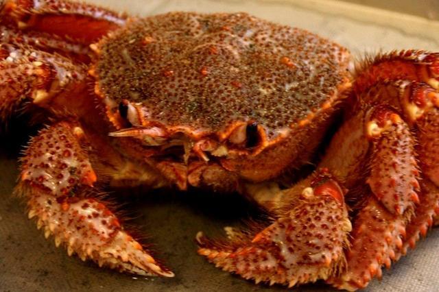画像: 毛蟹。こちらも生きている! 大きさによって6000円~13000円と幅広し。900gは、かなりの大きさ