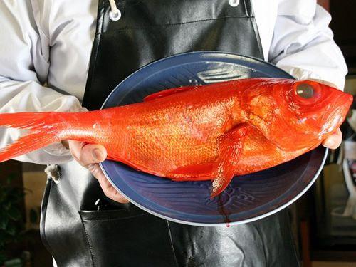 画像: こちらが金目鯛。高知県は西日本一の金目鯛の漁獲量、特に室戸沖はその8割弱を占めます。