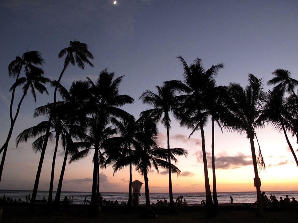 画像: 椰子の木々のシルエットが美しい夕暮れどきのマジック・アワー