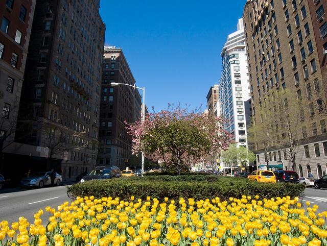 画像: 桜だけじゃない! 春のニューヨークを彩る花たち