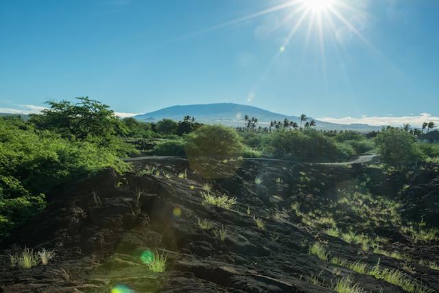 画像: 溶岩大地の向こうに横たわるマウナケア