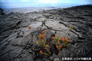 画像2: ハワイ火山国立公園
