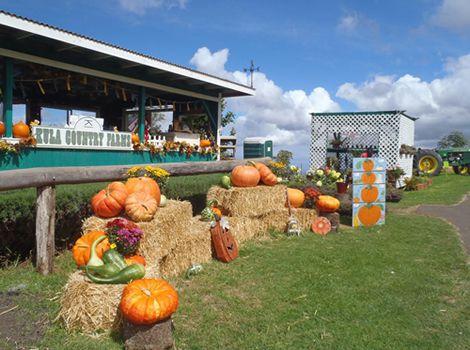 画像6: マウイ島・アップカントリー・タウン 体が美しくなる食を堪能する旅へ