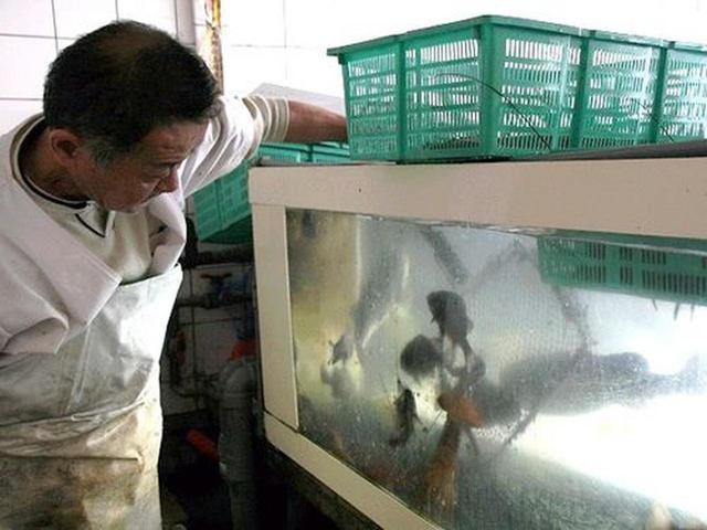 画像: 「おまかせ定食 (上)」を注文すると、斎藤さんがおもむろに生簀に行き、なんと、メバルを!これが定食になるのか?