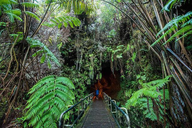 画像: 巨大なシダや熱帯の木々に覆われたサーストン溶岩トンネルの入口