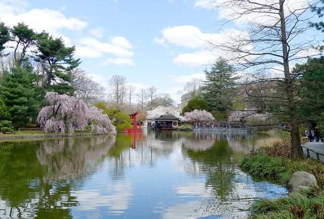 画像2: 桜の花に彩られた春のニューヨークへ