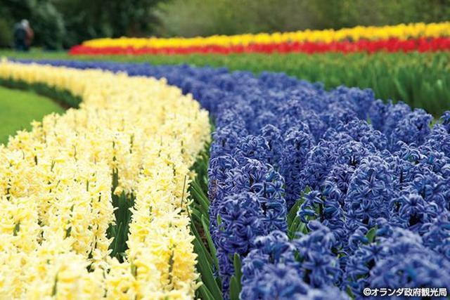 画像3: チューリップのほかにも色々!花咲く、春のオランダへ。