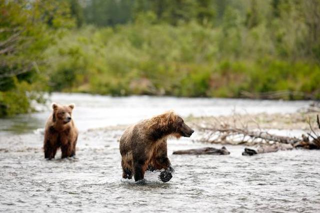 画像: ©State of Alaska/Chris McLennan
