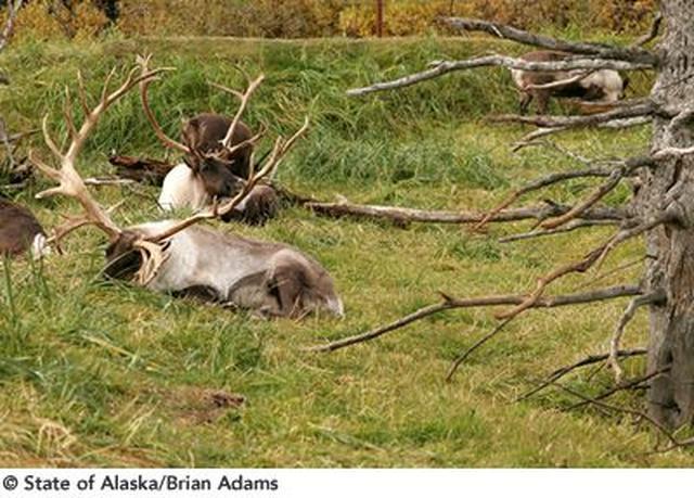 画像3: 山と水と森が織りなす壮大なパノラマ!アラスカ 絶景の大地を旅する