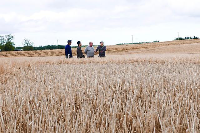 画像: 300エーカーの大麦畑を視察するリリーさん。この畑で1年に約60万本のウイスキーをつくることができる