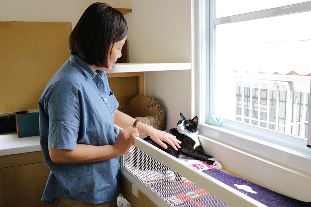 画像: 灰灰基地美術館 本当に猫がいる
