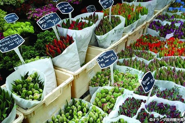 画像1: チューリップのほかにも色々!花咲く、春のオランダへ。