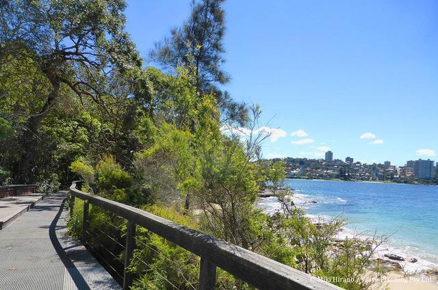画像: シドニー ハーバー コースタル ウォーク マンリー~スピット橋ウォーク