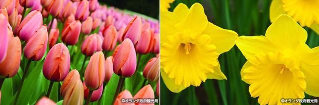 画像: およそ700万株の花々が咲くキューケンホフ公園へ