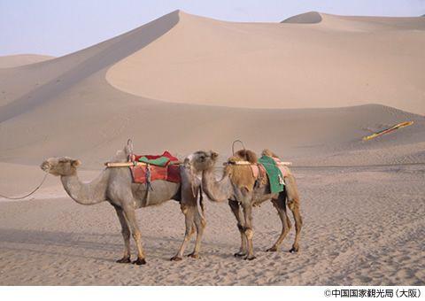 画像1: 美しき中国の西 シルクロードを旅する