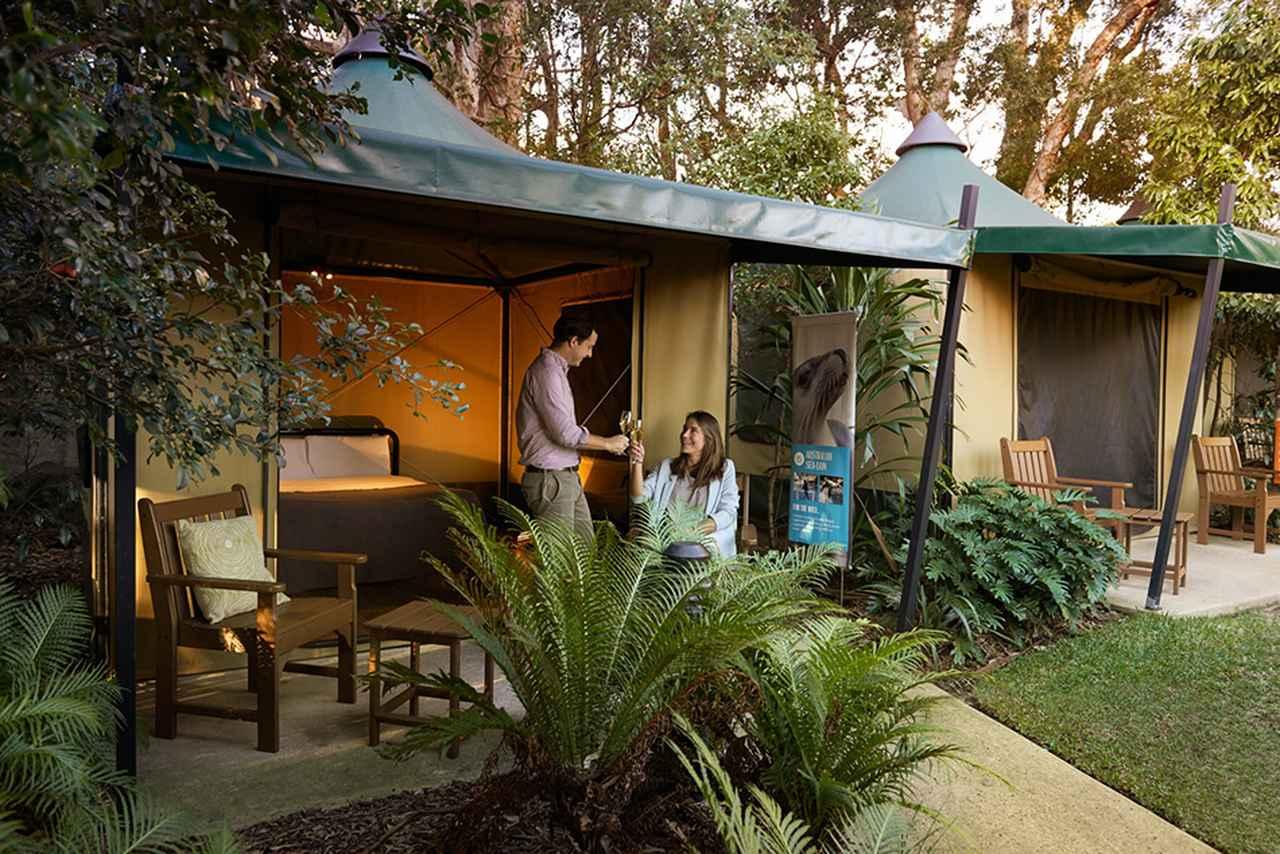画像: 準備や設営不要で快適に滞在できる常設テント © Taronga Zoo