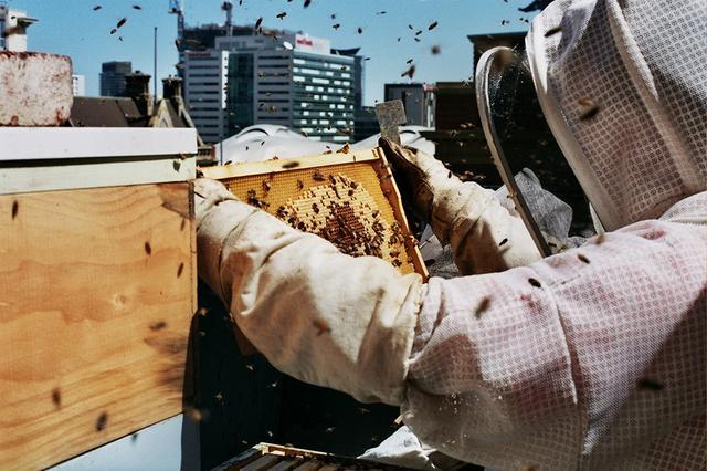 画像: 屋上で養蜂しながらハチミツを採取し、朝食に提供 © Alto Hotel on Bourke