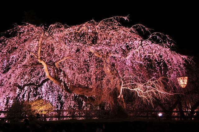 画像32: 秋田内陸線で行く 秋田・青森の食と文化を堪能!大満足の2日間