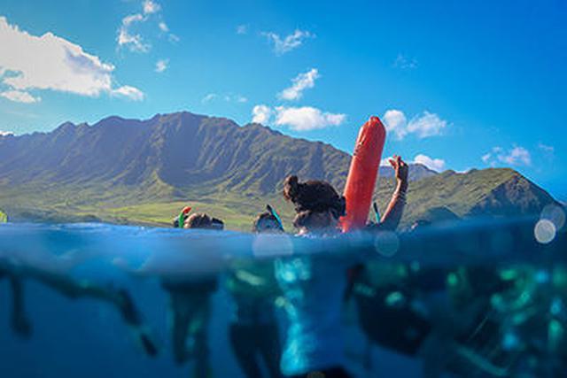 画像4: 現地スタッフが体験!~ 野生のイルカと泳ぐツアー ~