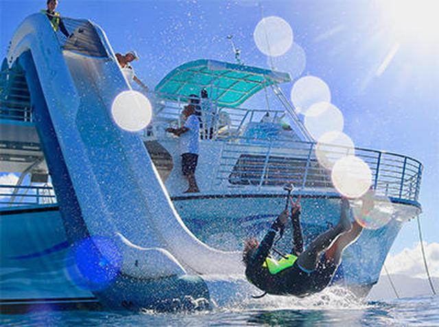 画像9: 現地スタッフが体験!~ 野生のイルカと泳ぐツアー ~