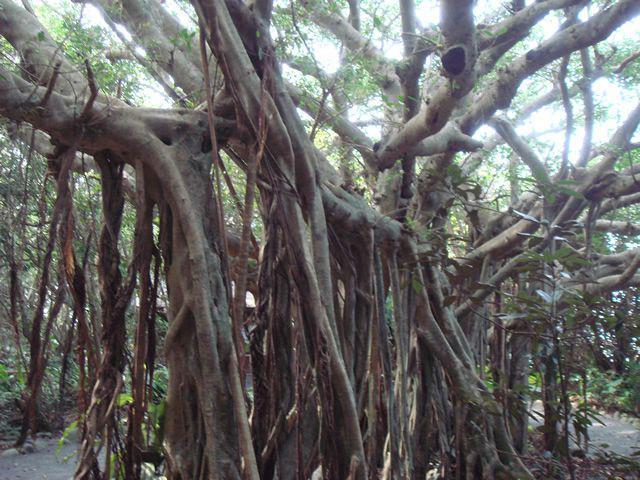 画像10: 感動の自然大満喫2泊3日 よくばり★しま旅 種子島・屋久島
