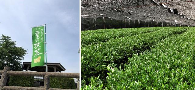 画像3: 日本一の抹茶のさとを巡る ~愛知県西尾市~
