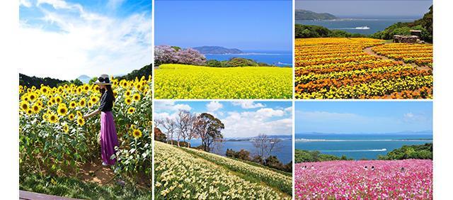 画像: 春:桜、菜の花 夏:向日葵 秋:コスモス 冬:さざんか、梅 などなど
