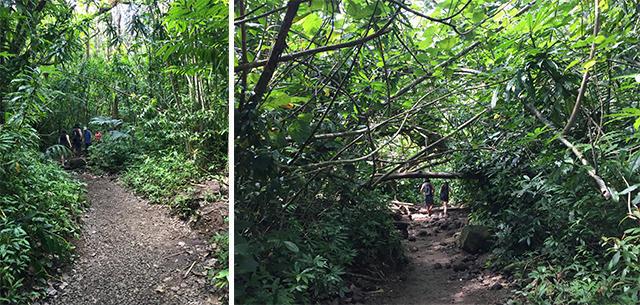 画像9: 現地スタッフが体験!~ マノア滝ハイキング ~