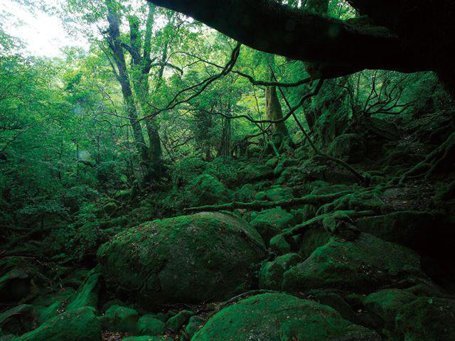 画像11: 感動の自然大満喫2泊3日 よくばり★しま旅 種子島・屋久島