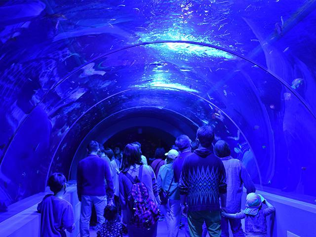 画像: 12:10 久慈地下水族科学館もぐらんぴあ