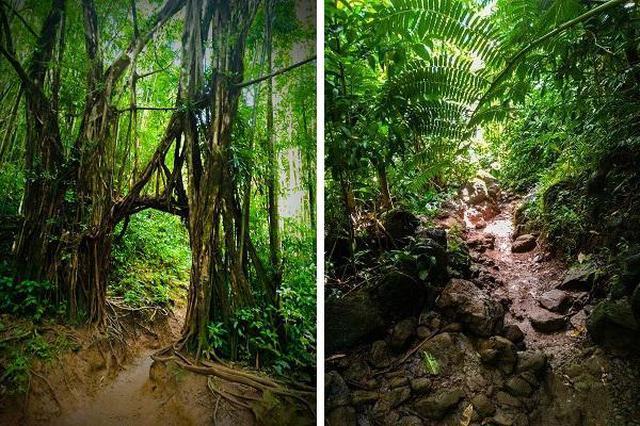 画像7: (ハワイ)現地スタッフが体験!~コオラウ山脈南東端の南側に広がる マノア・フォールズ~