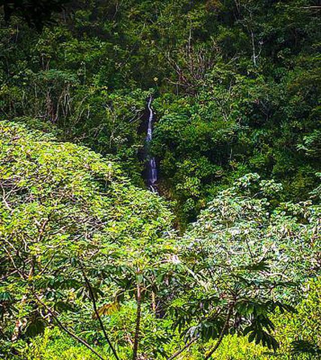 画像11: (ハワイ)現地スタッフが体験!~コオラウ山脈南東端の南側に広がる マノア・フォールズ~