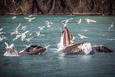 画像2: 機内からザトウクジラが見えるかも!?