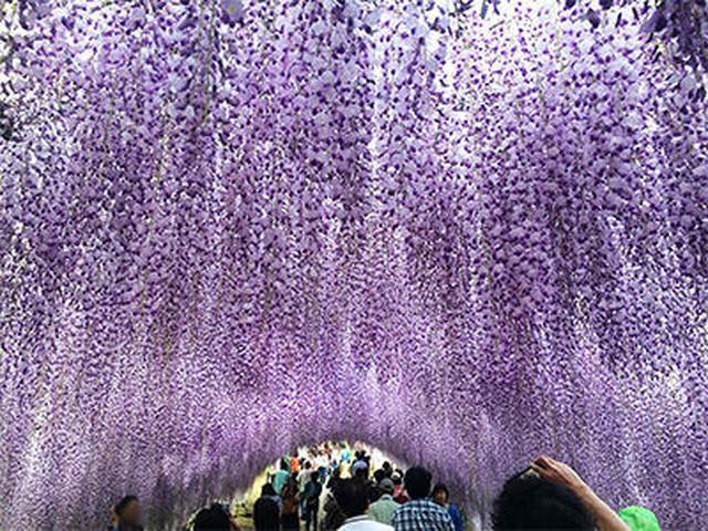 画像4: 美しい自然とレトロな街! 北九州の魅力について