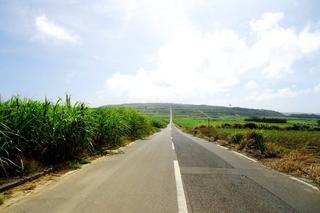 サトウキビの一本道