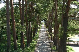 松・杉並木