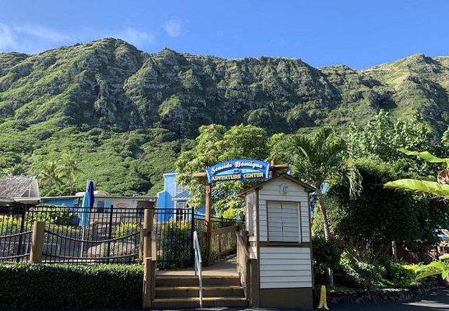 画像3: (ハワイ)現地スタッフが体験!~シーライフパーク ドルフィン・スイム・アドベンチャー~