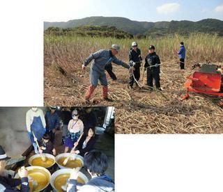 サトウキビ植え付け・収穫体験