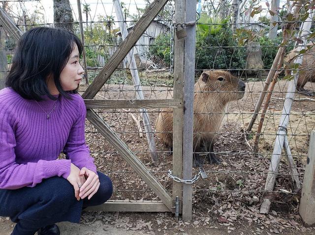 画像: カピバラの鳴き声は意外と高音で「キュルルル」という鳴き声もかわいい反則的な動物です。