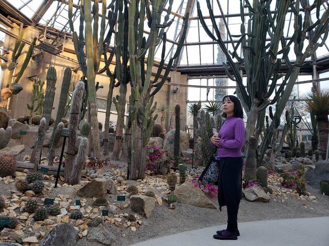 画像: 人間の脳波をチューニングしてくれそうなサボテンの空間。遠いセドナに行けなくてもこの植物園なら空港からすぐ行けます。