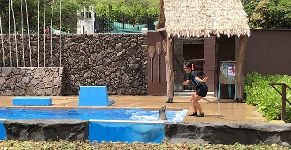 画像14: (ハワイ)現地スタッフが体験!~シーライフパーク~