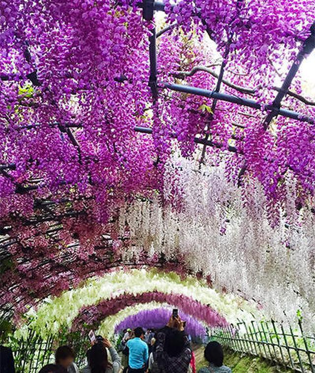 画像3: 美しい自然とレトロな街! 北九州の魅力について