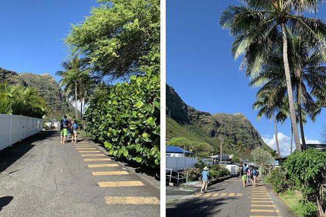 画像4: (ハワイ)現地スタッフが体験!~シーライフパーク ドルフィン・スイム・アドベンチャー~