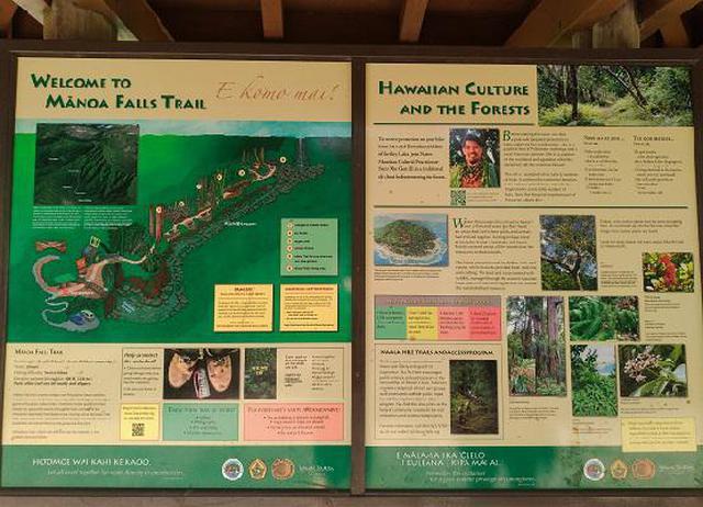 画像3: (ハワイ)現地スタッフが体験!~コオラウ山脈南東端の南側に広がる マノア・フォールズ~
