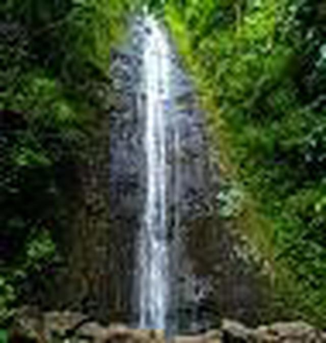 画像1: (ハワイ)現地スタッフが体験!~コオラウ山脈南東端の南側に広がる マノア・フォールズ~