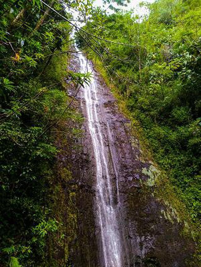 画像10: (ハワイ)現地スタッフが体験!~コオラウ山脈南東端の南側に広がる マノア・フォールズ~