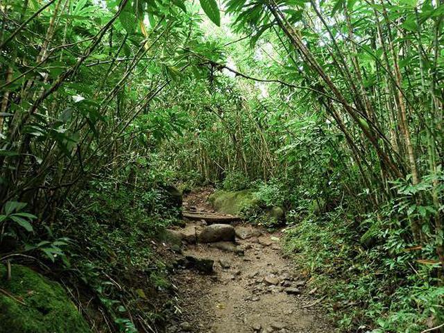 画像6: (ハワイ)現地スタッフが体験!~コオラウ山脈南東端の南側に広がる マノア・フォールズ~