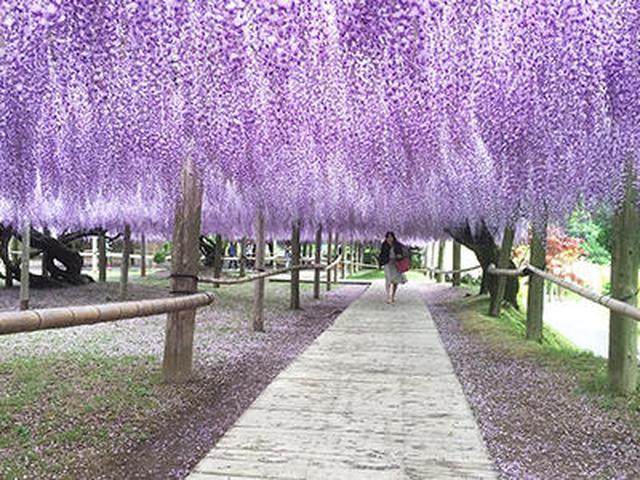 画像2: 美しい自然とレトロな街! 北九州の魅力について