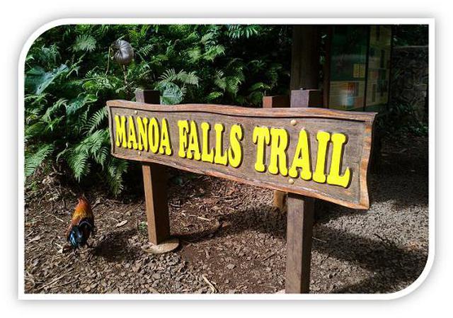 画像2: (ハワイ)現地スタッフが体験!~コオラウ山脈南東端の南側に広がる マノア・フォールズ~