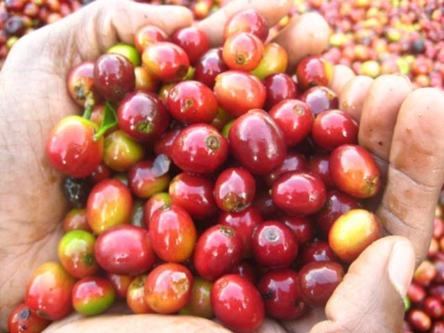 画像: 参考写真(宮田恵子さん提供)いずれもチクマガルールのコーヒー農園で撮影